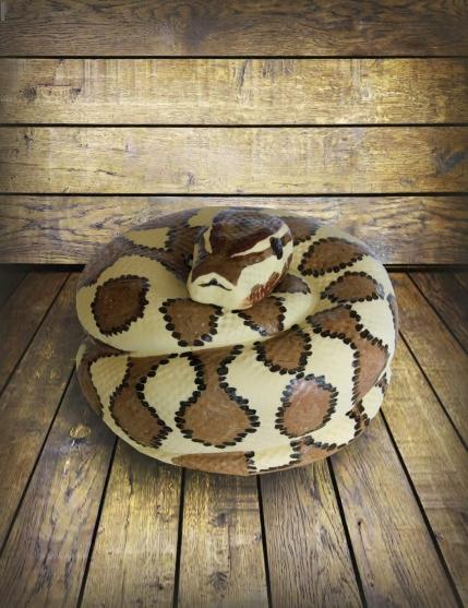 Python Cake